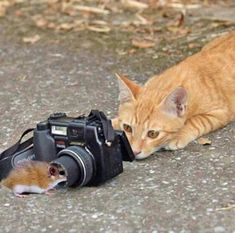 Cat & Mouse game...... I see you!