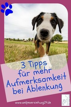 3 great tips for your dog to take care of you klasse Tipps, damit dein Hund draußen auf dich achtet 3 simple tips for your dog to take care of you outside – puppy training - Havanese Dogs, Labradoodle, Pet Dogs, Dog Cat, Dog Hacks, Jack Russell Terrier, Exotic Pets, Pet Clothes, Training Your Dog