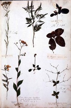 Early Botanical Collections from Colonial Maryland