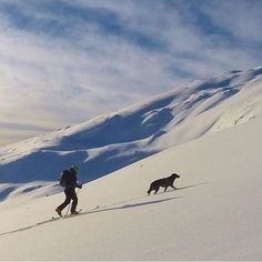 Never stop exploring. #campingwithdogs @beauceron1