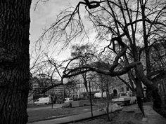 Black and white photography: Graafiset puut Tukholmassa