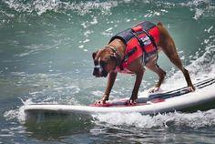 Surfing boxer