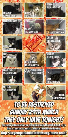 IS YOUR PET MISSING ? TAKE A LOOK ... all these 16 cats are scheduled to be killed tomorrow, YES THIS SUNDAY / FOSTERING is FREE;  There is free transport up to 4 hours from NYC - PLEASE HELP !!!https://www.facebook.com/PetsOnDeathRow