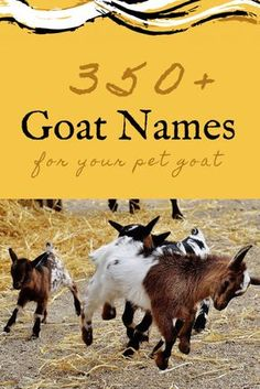 Thinking about adopting a goat and need some help thinking of good goat names? Here are over 350 goat name ideas to graze through!