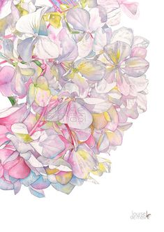 Hydrangea watercolor painting print. A3 size H25117 Hydrangea