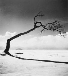 KUSSHARO LAKE TREE, STUDY 10, KOTAN, HOKKAIDO, JAPAN, 2005 _ Michael Kenna