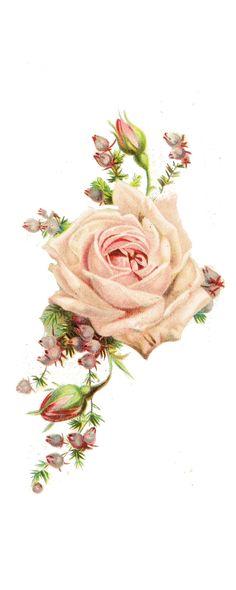 roses, vintage printable