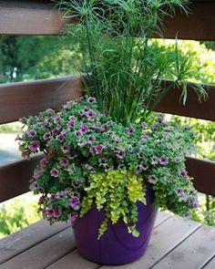 Container garden in pot