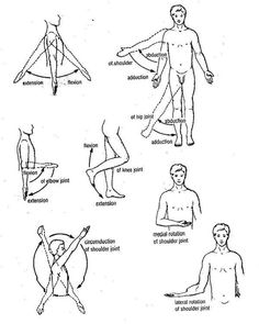 Movements of limbs
