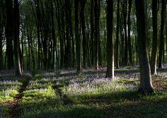 Micheldever woods.