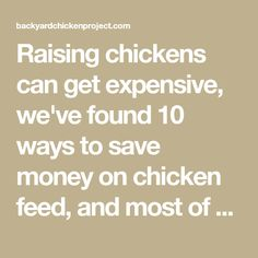 Raising chickens can get expensive, we've found 10 ways to save money on chicken feed, and most of them require very little of you!