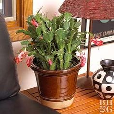Idea Of Making Plant Pots At Home // Flower Pots From Cement Marbles // Home Decoration Ideas – Top Soop Types Of Cactus Plants, Kinds Of Cactus, Orchid Plants, Air Plants, Orchids, Easter Cactus, Cactus Pot, Cactus Flower, Tall Cactus
