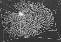 l mas resistente El material más resistente creado por la naturaleza es la tela de araña