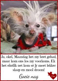 Weekend Greetings, Evening Greetings, Good Night Wishes, Good Night Quotes, Lekker Dag, Goeie Nag, Afrikaans Quotes, Daily Quotes, Humor