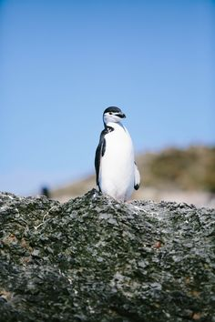 Antarctica travel journal part 1 / South Shetland Islands / Shannon Kirsten Photography