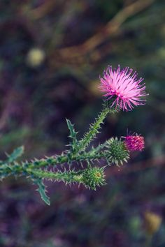 Nature Dandelion, Flowers, Nature, Plants, Garden, Garten, Dandelions, Naturaleza, Planters
