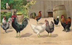 Antique print Chickens Roosters Domestic Fowl Barnyard Scene - 1909 Lithograph - Wonderful to Frame via Etsy