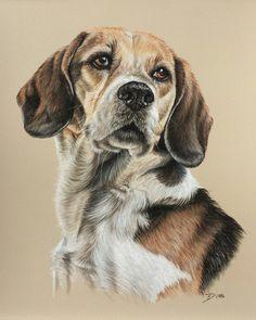 Hund, Beagle, Zeichnungen, Tiere