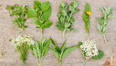 Wildkräuter: Diese Superfoods wachsen umsonst vor deiner Haustür