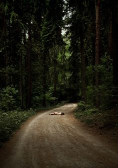 nude study | mother nature | sleeping on a dirt track | dirt road in the forest | woods | naked in nature | perfect composition | wow |  rest | timeout | relax | solitude | alone in the woods