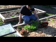 Steve has been asking me if I want a cold-frame for years now. All along I have a 10 gallon fish tank empty in my basement. I may give this a try as soon as I have a plot of soil clear. The guy in the video says it is February. Homemade Greenhouse, Mini Greenhouse, 10 Gallon Fish Tank, Growing Seedlings, Clear Plastic Containers, Cold Frame, Aquarium Fish, Garden Plants, Empty