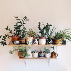 A pot can change the whole aesthetic of a shelf. Shape, size, and color can all be interesting angles to play with! How do you add character your shelf? : @smallspells #modernmacramé