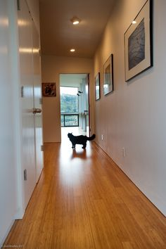 Bamboo flooring for the hallway