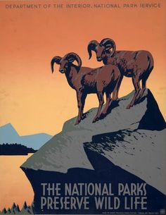 """The National Parks Preserve Wild Life. A WPA Federal Art Project poster for the National Park Service promoting travel to National Parks. This National Park poster shows two bighorn sheep and reads, """" Retro Poster, Poster Vintage, Vintage Travel Posters, Vintage Ads, Vintage Graphic, Poster Poster, Vintage Movies, Vintage Stuff, Vintage Signs"""
