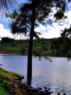 #Canarias #GranCanaria Arbol en el agua by ToniTeror.deviantart.com