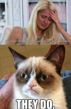 Cat memes, cat jokes, grumpy cat humor, grumpy kitty, grumpy ca Grumpy Cat Quotes, Funny Grumpy Cat Memes, Funny Animal Jokes, Cat Jokes, Cute Funny Animals, Funny Animal Pictures, Funny Cats, Angry Cat Memes, Meme Comics