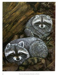Racoons painted on rocks