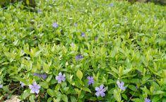Die besten immergrünen Bo - Haus How to Crafts Garden Design, House Design, Woodland Garden, Herbs, Nature, Flowers, Decor, Gardening, Wordpress