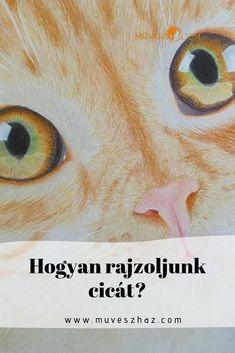 Szép, élethű cicát szeretnél rajzolni? Kattints.