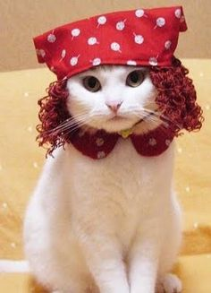 cats wearing hats | Cats Wearing Hats | Cute Pictures | Animal Photos