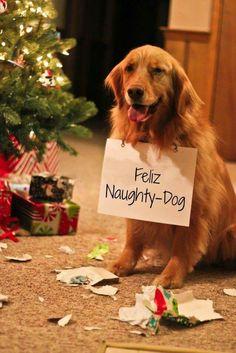 Feliz Naughty - Dog!