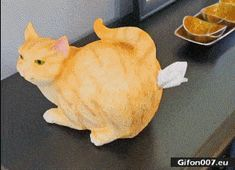 Funny Gifs, Funny Quotes, Cat Memes, I Laughed, Laughing, Fails, Chloe, Funny Pictures, Homes