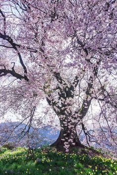 東京カメラ部 Editor's Choice:Tadashi Sato