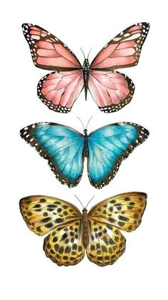 Butterfly Images, Butterfly Drawing, Butterfly Painting, Drawings Of Butterflies, Butterfly Quotes, Pink Butterfly, Butterfly Wings, Art Papillon, Photo Wall Collage
