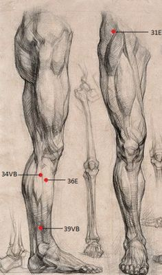Body Reference Drawing, Body Drawing, Anatomy Reference, Art Reference Poses, Life Drawing, Profile Drawing, Human Anatomy Drawing, Human Body Anatomy, Human Figure Drawing