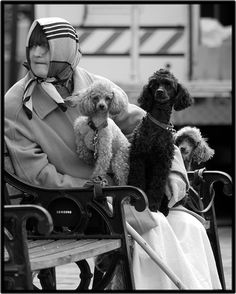 The Poodle Lady.... This will be me in a few years. But I will be known as The Crazy Poodle Lady. Oh wait.....that's me now LOL