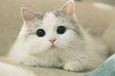 The most innocent face Kittens And Puppies, Cute Cats And Kittens, I Love Cats, Kittens Cutest, Animals And Pets, Baby Animals, Cute Animals, Beautiful Cats, Animals Beautiful