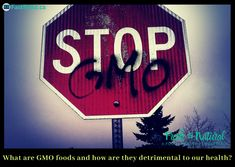 Are GMO Foods very detrimental to our health and wellness? - something to think about as we approach holiday times and a new year. Holidays are mostly spent with friends and family, sharing food and gifts and getting ourselves ready for a new year. Save Our Earth, Food Out, Health Foods, Our Body, Clean Recipes, Baby Food Recipes, Bodies, Health And Wellness, Choices