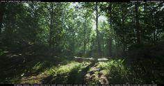 Alexander_Dracott_forest_ligh_80lv_01.jpg (1498×792)