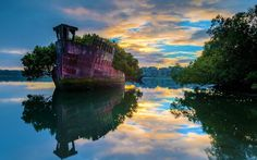 Via Lost at E Minor - This incredible floating forest is the result of 102 years of mangrove tree growth in Homebush Bay, Sydney. The SS Aryfield is an abandoned ship used in WWII that was left in the bay to deteriorate after the ship wrecking yard closed down. The massive ship's rusty hull is now home to lush vegetation, including full-grown mangrove trees.