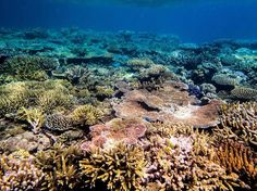 This is a photo of the Great Barrier Reef this time last year. And now because of our government All this colorful beauty is almost gone. It is so heartbreaking to know this is happening. Respect our oceans and care for them! They hold the most beauty!  by steph_gandarillas http://ift.tt/1UokkV2