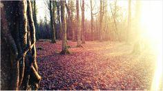 Ballymahon Woods