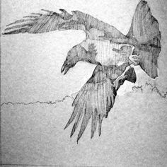 """Beauty-Full Illustration!!  """"Hooded Crow"""" by _______????"""