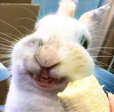 /r/rabbits is an open community where users can learn, share cute pictures, or ask questions about rabbits. Please note we are a *pet rabbit*. Cute Baby Bunnies, Funny Bunnies, Cute Babies, Funny Rabbit, Pet Rabbit, House Rabbit, Cute Little Animals, Cute Funny Animals, Amor Animal