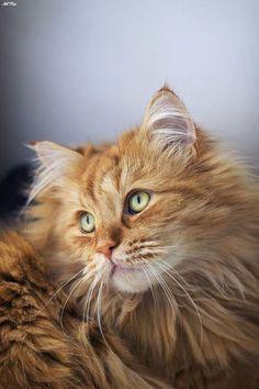 Beautiful Cat++