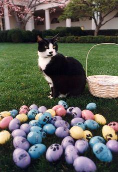 Este es el gato Socks de la familia Clinton. Ha sido la inspiración para celebrar el Día Internacional del Gato el 20 de Febrero de cada año | blackiecat.com
